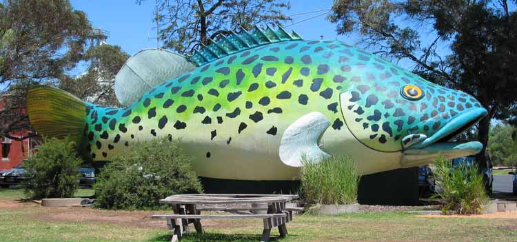 [Giant Murray Cod in Swan Hill]